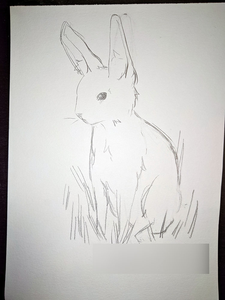 Realistic Rabbit, so cute too
